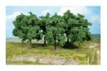 drzewo owocowe 12cm