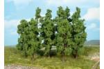 Drzewa wysokopienne 18cm